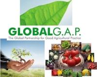 Chứng nhận tiêu chuẩn GLOBAL GAP